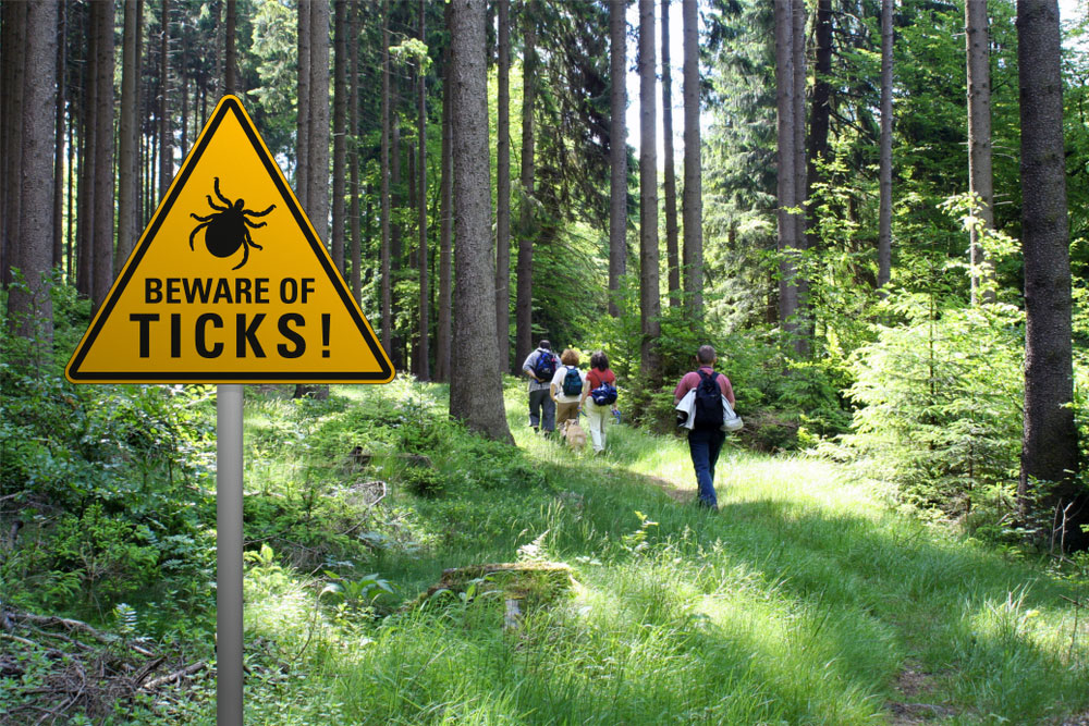 people walking in the woods with a beware of ticks sign